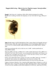 Hjerterytme hos Daphnia magna- Senergi – koffein & nikotin