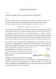 Lyskilder og fotosyntese | Biologi | 12 i karakter