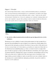 Hornfisk | Bioteknologi opgave | 10 i karakter