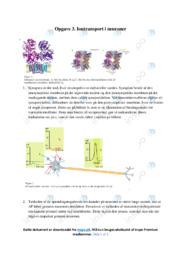 Iontransport i neuroner   10 i karakter