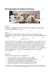 Forsøg med enzymet katalase | Biologirapport