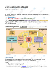 Cell respiration stages   Opgave