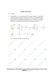 Cassava | Opgave | 10 i karakter