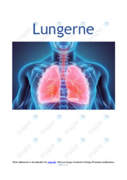 Lungerne   Biologi Rapport   10 i Karakter