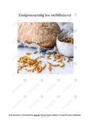 Energiomsætning hos melbillelarver | Biologi | 12 i Karakter